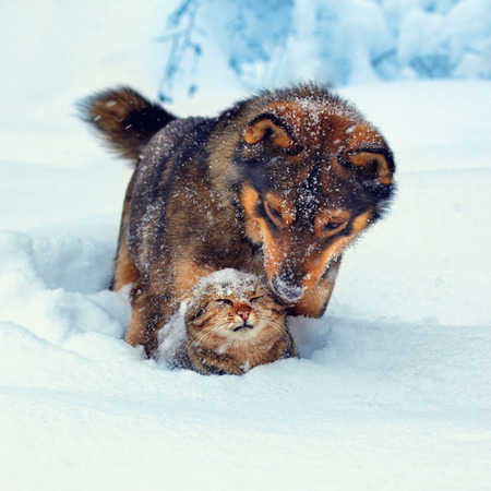 Dog playing with kitten in the snow
