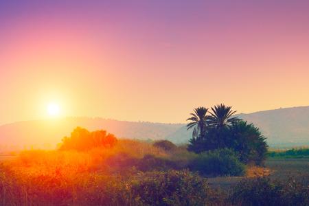 desierto: Paisaje del desierto al atardecer
