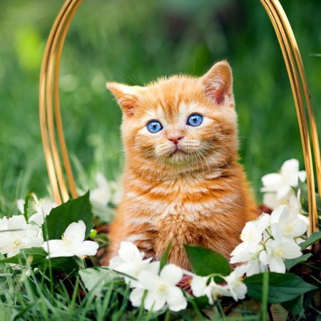 basket: Cute little kitten sitting in a basket with flowers Stock Photo