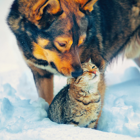 The best friends cat and dog outdoor in snowy winter