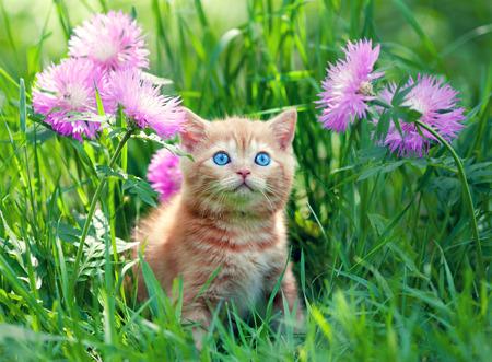 Cute little kitten sitting in flower meadow photo