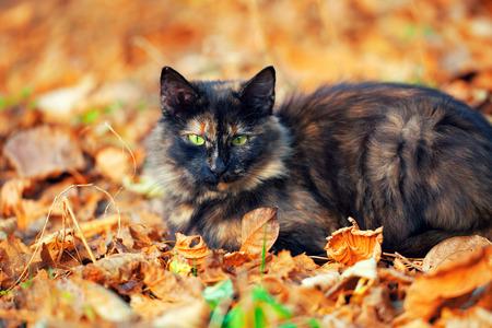 Mignon chat couché sur les feuilles jaunes Banque d'images - 34085348