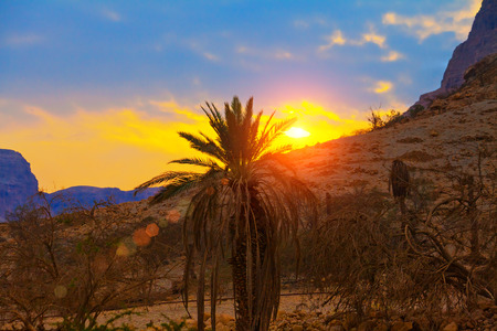 ein: Palm against mountains at sunset, Israel