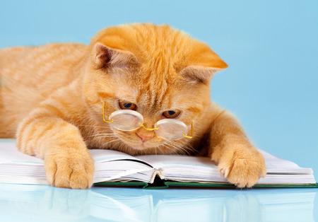 노트북을 읽고 안경을 착용하는 귀여운 비즈니스 고양이 (책) 스톡 콘텐츠
