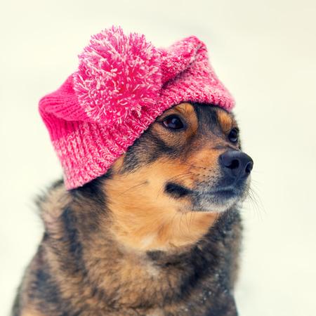 pompom: Cane indossa cappello ginocchio con pompon camminare all'aperto in inverno