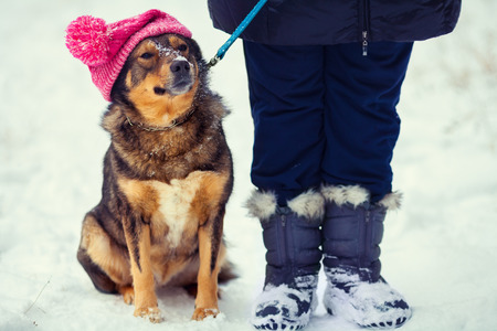 white clothing: Dog wearing knee hat with pompom walking with owner outdoor snowy in winter Stock Photo