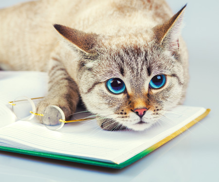 Cute business cat with glasses reading notebook (book)