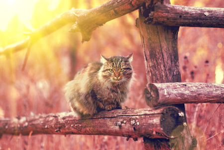 siting: Cat siting on a fence at sunset