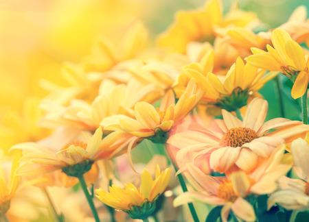 campo de flores: C�sped de la flor de la vendimia para el fondo