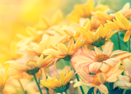 flower background: Vintage flower lawn for background