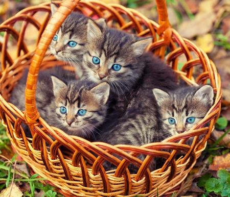 cute kittens: Cute kittens sitting in a basket outdoors Stock Photo