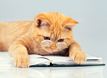 Cute business cat wearing glasses reading notebook (book)