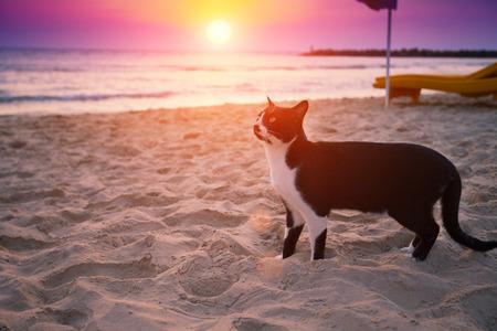 夕暮れ時、ビーチの上を歩く猫