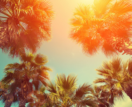 vintage frame: Palm trees against sky at sunset