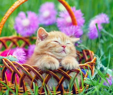 Cute little kitten sleeping in a basket on the floral lawn