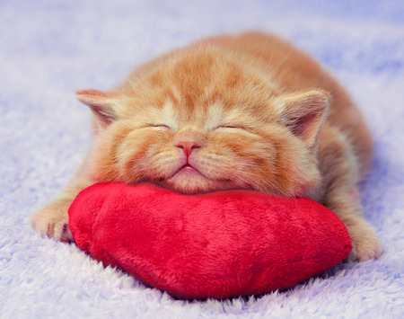 the young animal: Kitten sleeping on the heart-shaped pillow Stock Photo