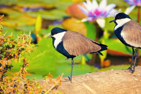 tropics: Bird in the tropics Stock Photo