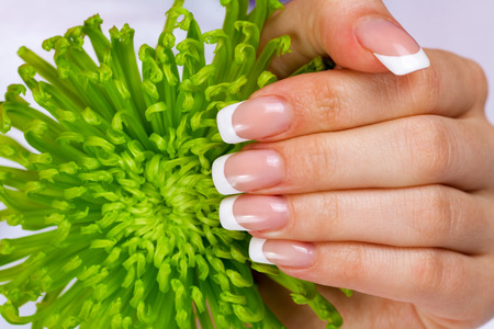 french manicure: Beautiful female hand with french manicure
