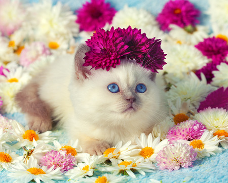 siamese: Cute siamese little in flowers Stock Photo