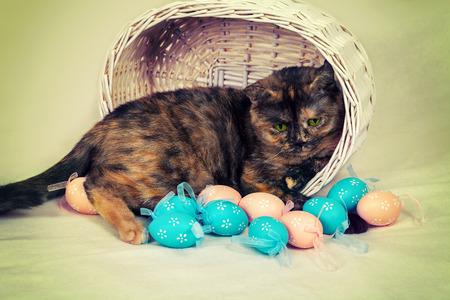 Cute cat in a basket with colored eggs photo