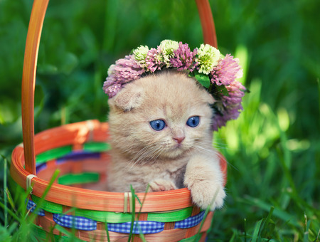 Cute kitten crowned with chaplet in a basket
