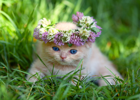 cute bi: Cute little kitten crowned with a flower chaplet sits on the grass Stock Photo