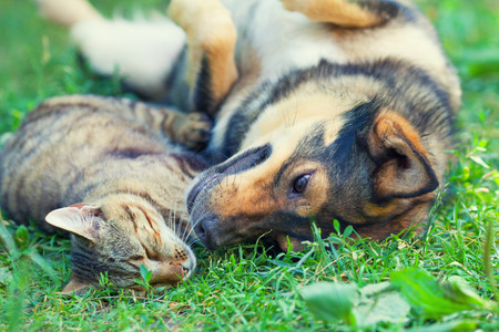 dog cat: Dog and cat lying together on the grass