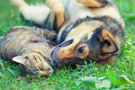 Hond en kat liggen samen op het gras Stockfoto