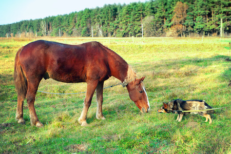 Horse and dog sniff to each other Stock Photo
