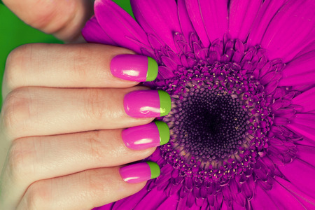 nail file: Beautiful female hand with french bi color manicure on gerbera flower Stock Photo