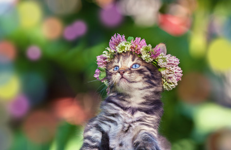 cute bi: Cute kitten crowned with a chaplet of clover