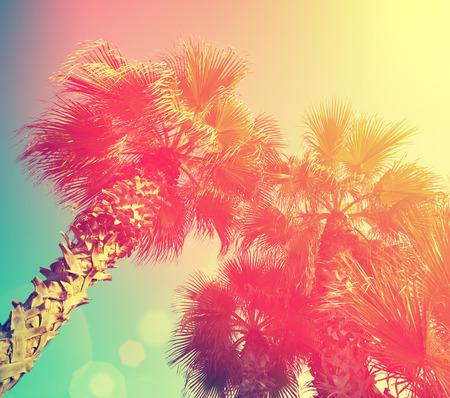 palmier: Vintage frame avec des arbres tropique de palmiers sur fond de ciel