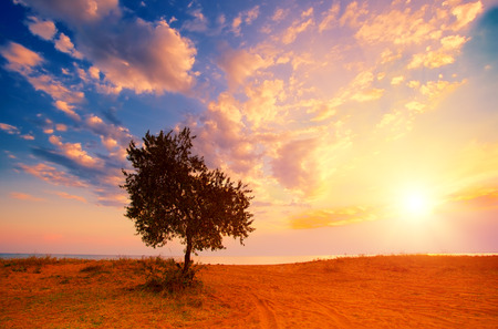 sunrise: Alone tree on the beach at sunrise
