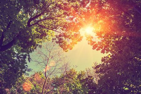 paisajes: Marco de la vendimia de los árboles en pleno mediodía Foto de archivo