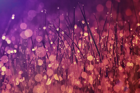 color pattern: Nature background. Morning dew on the grass in marsala color Stock Photo