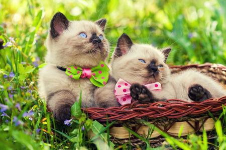 cute bi: Two little kitten wearing bow tie on the grass