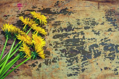 Grunge background with dandelion flowers photo