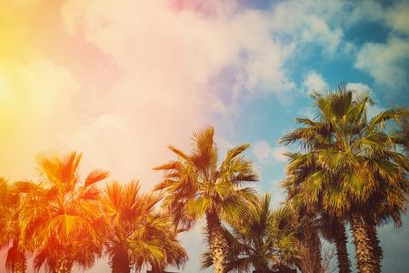 phoenix: Árboles Tropic palmeras contra el cielo en la luz del atardecer Foto de archivo