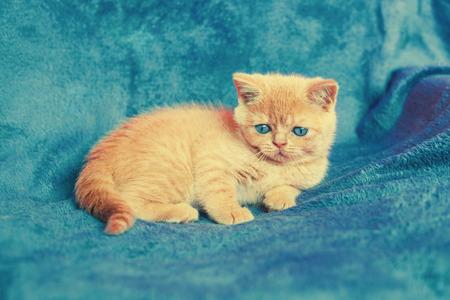 kitten: Cute kitten on blue blanket Stock Photo