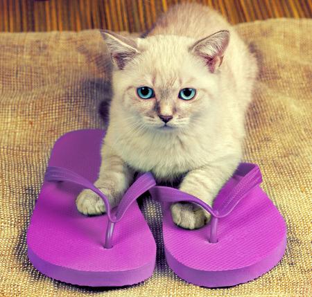 wearing sandals: Little kitten wearing flip flops sandals