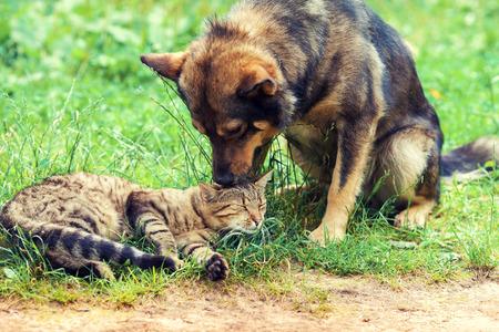 犬と猫親友一緒に遊んで屋外 写真素材