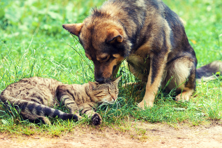 Dog and cat best friends playing together outdoor