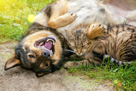 wild dog: Dog and cat best friends playing together outdoor. Lying on the back together. Stock Photo