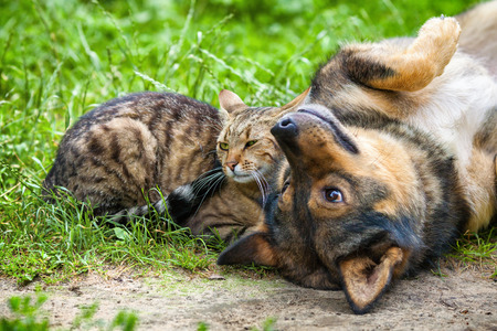 Dog and cat best friends playing together outdoor. Lying on the back together. Stock Photo