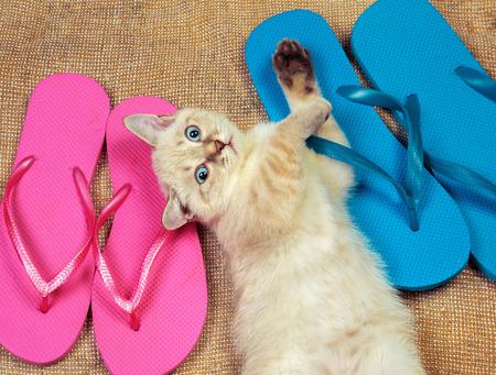 flops: Little kitten wearing flip flops sandals