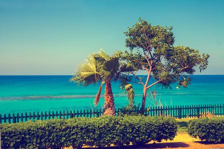 embankment: Palm trees on the embankment