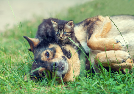 laying on back: Big dog and little kitten Stock Photo