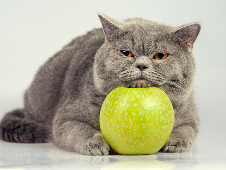 cute kitty: Cute cat with green apple Stock Photo