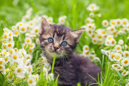 kitten: Cute kitten relaxing in flowers Stock Photo