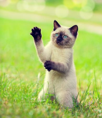 begging: Playful kitten begging on the grass